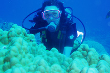 Pacific Divers Water Activities Cook Islands Diving Rarotonga
